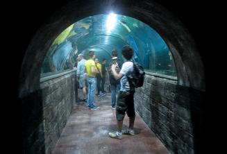 Studenti v tunelu akvária